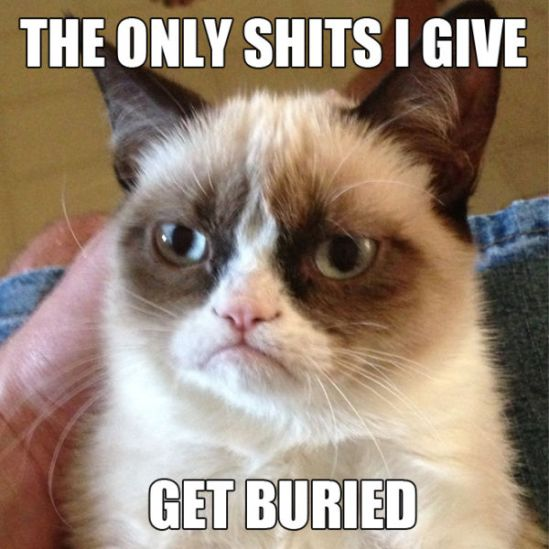 funny_grumpy_cat_meme_selection_640_10